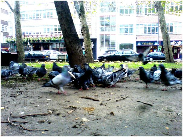 bird-flu-is-just-the-beginning